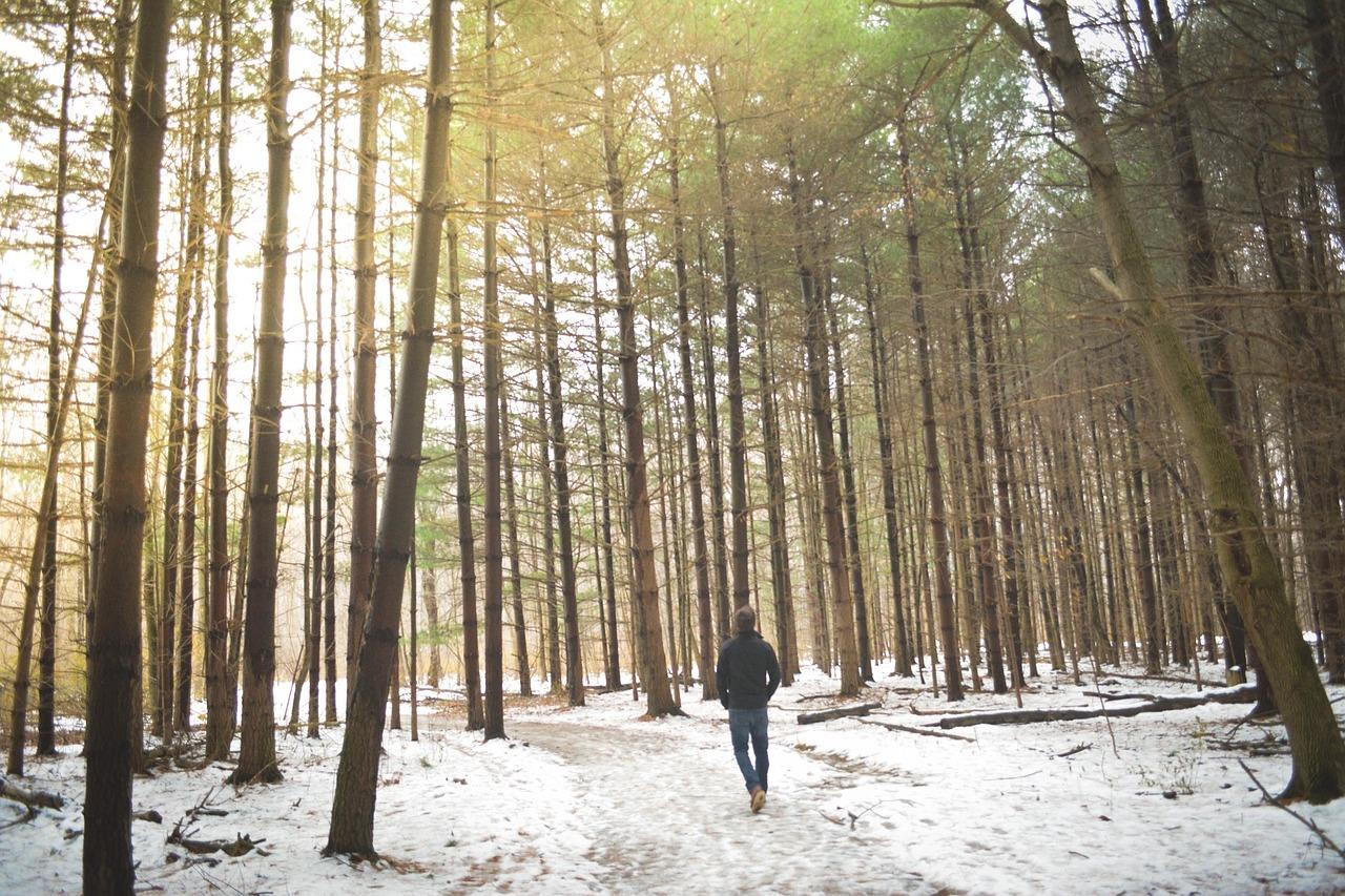 Ein Waldspaziergang im Winter