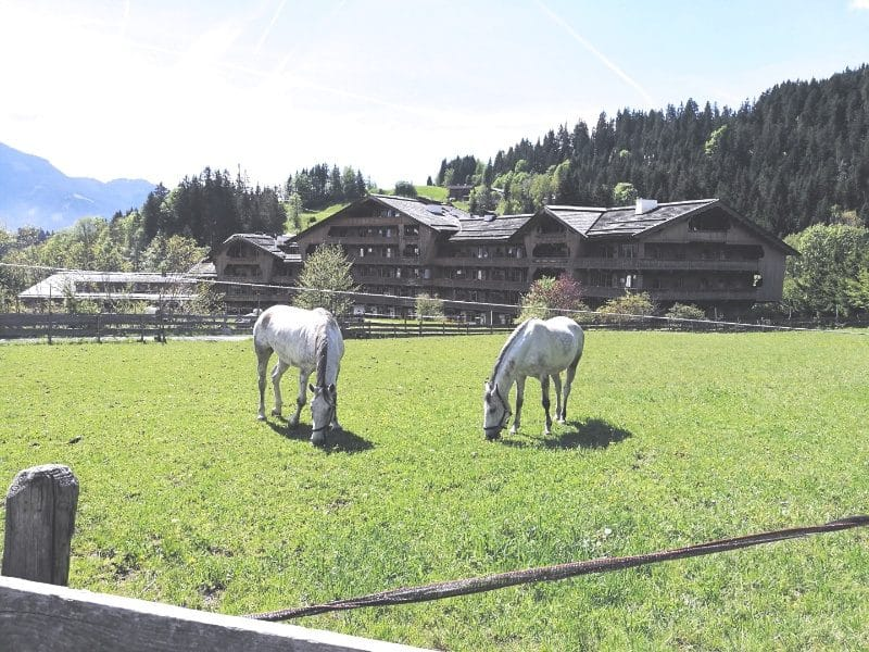 stanglwirt-pferde