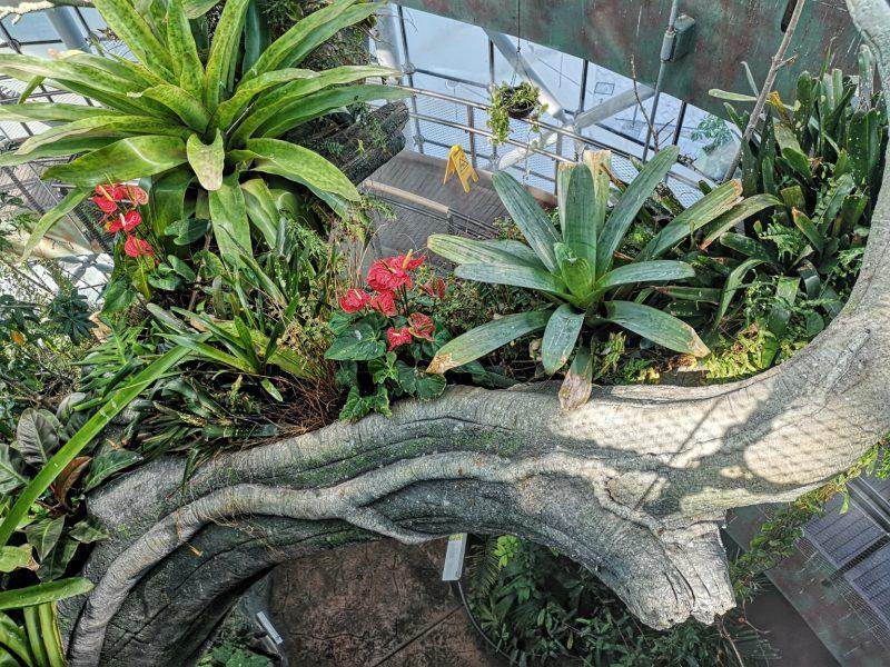 Pflanzen im Green Planet Dubai