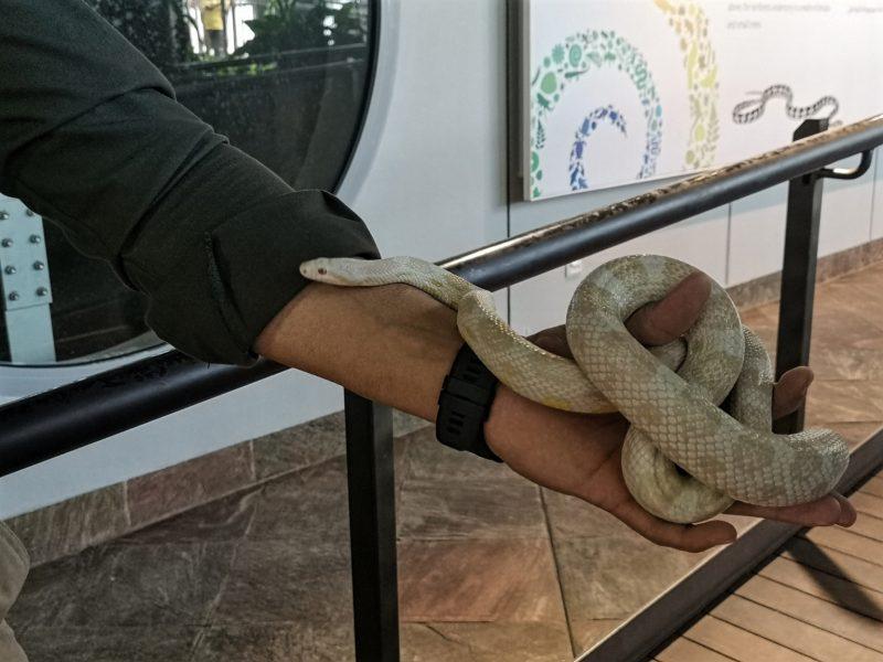 Schlangen im kleinen botanischem Garten in Dubai